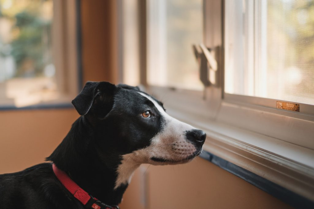 Removing a No Pets Policy for Your Rental Property
