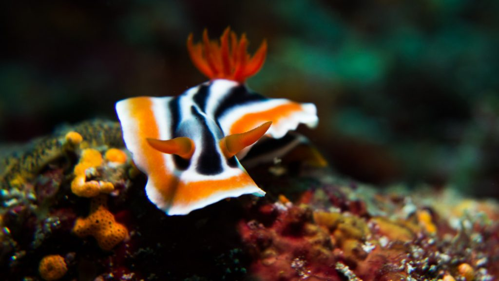 Sea critters, micro diving in Bali