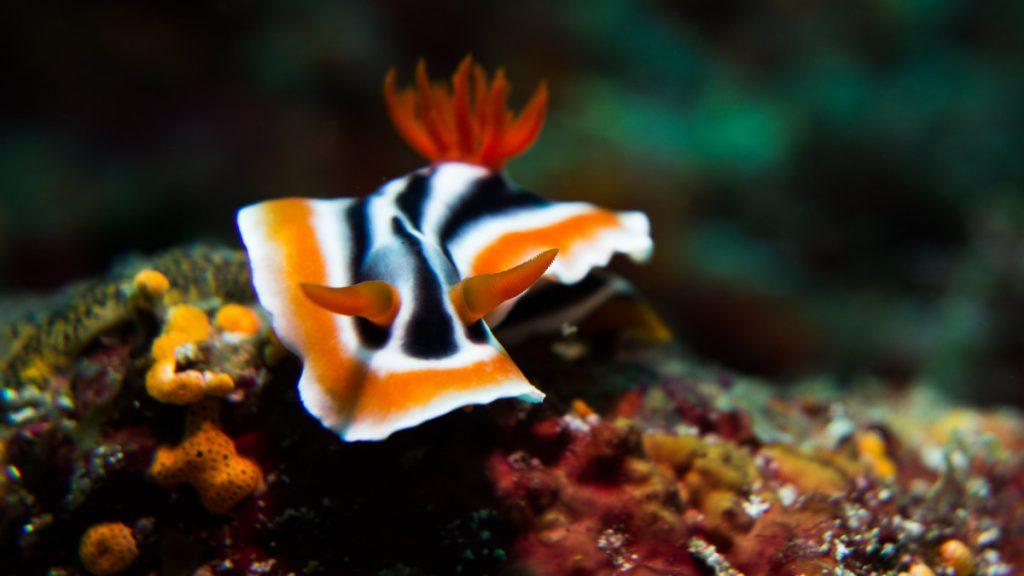 Sea critters, micro diving in Bali